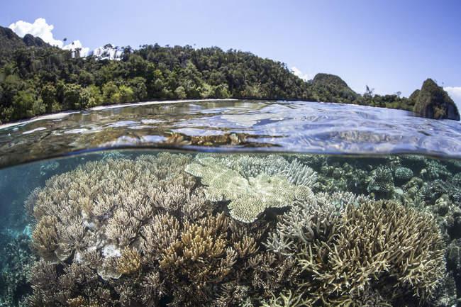 Korallenriff in der Nähe von Kalksteininsel — Stockfoto