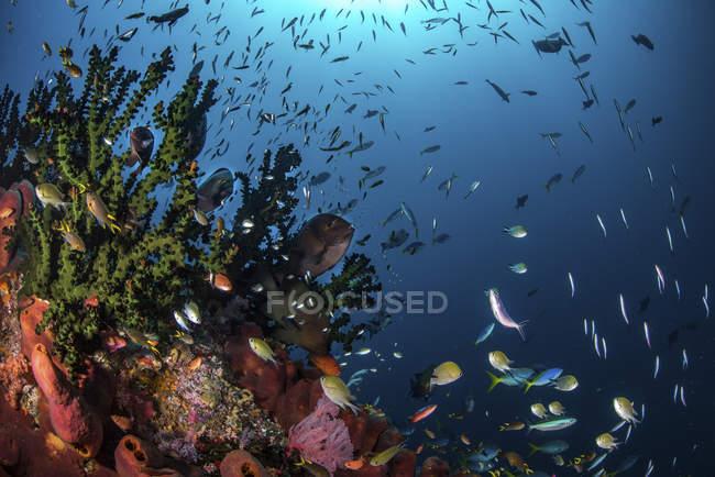 Peces y corales en los arrecifes - foto de stock