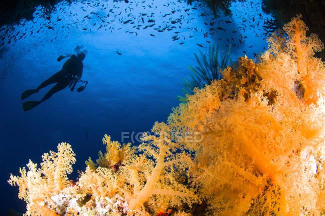 Plongée au-dessus du récif corallien — Photo de stock