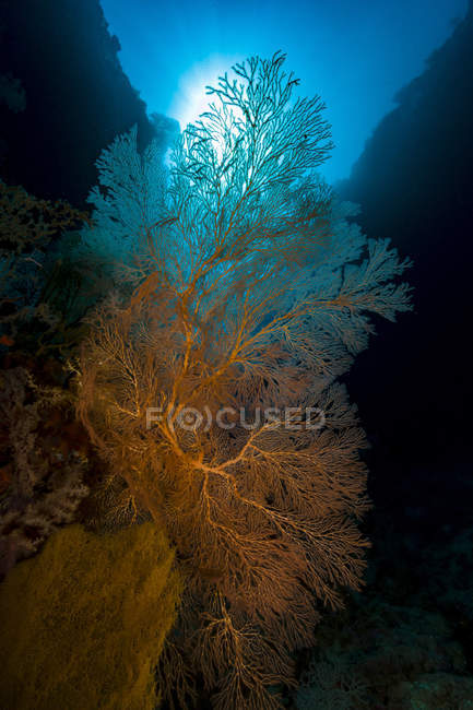 Sea fans with sunlight — Stock Photo