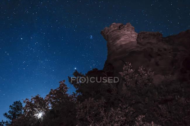 Moon rising behind trees — Stock Photo
