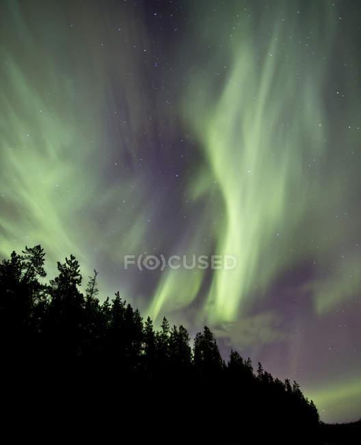 Aurora borealis поверх деревьев — стоковое фото