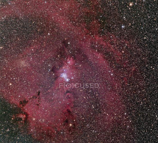 Cone Nebula and Christmas Tree Cluster — Stock Photo