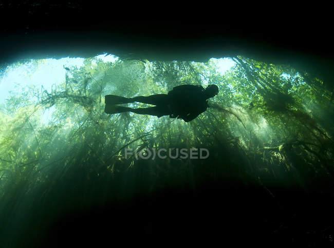 Scuba diver in Garden of Eden cavern — Stock Photo