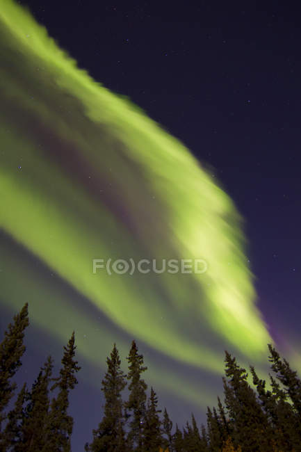 Aurora Borealis über Bäume — Stockfoto