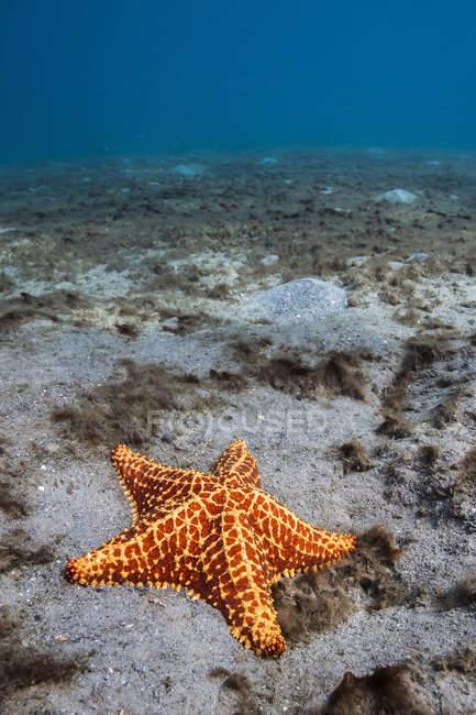 Starfish біля моста блакитна чапля — стокове фото