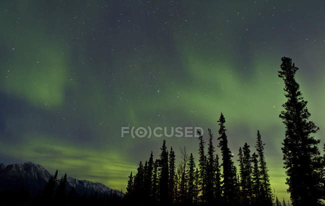 Aurora borealis over trees — Stock Photo