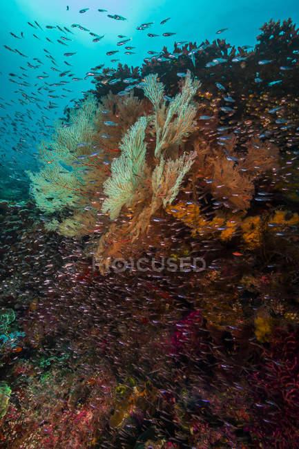 Récif corallien et troupeau de poissons — Photo de stock