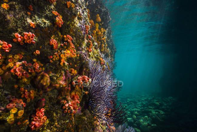 Colorido arrecife de coral en La Paz - foto de stock