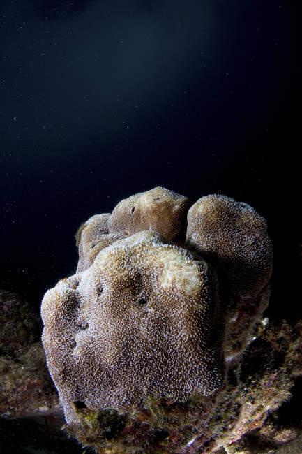 Vue des coraux de corail sur fond noir — Photo de stock