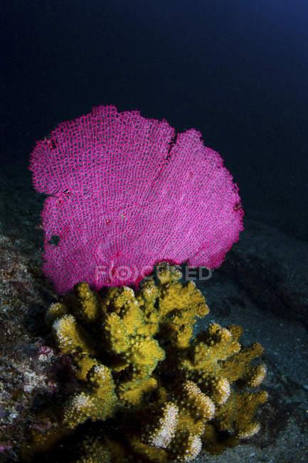 Bunte hart- und Weichkorallen am Riff — Stockfoto