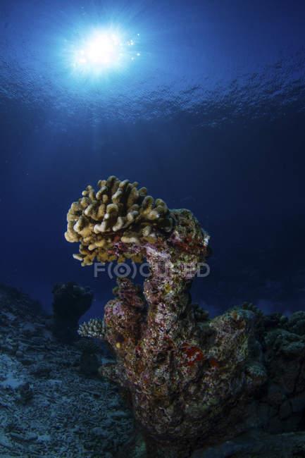 Steinkorallen am dunklen Riff angezündet — Stockfoto