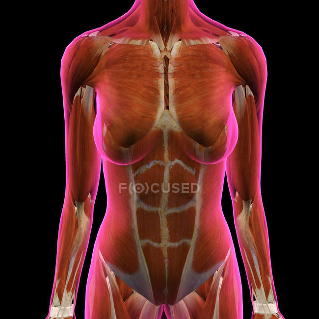 Female chest and abdominal muscles on black background — Stock Photo