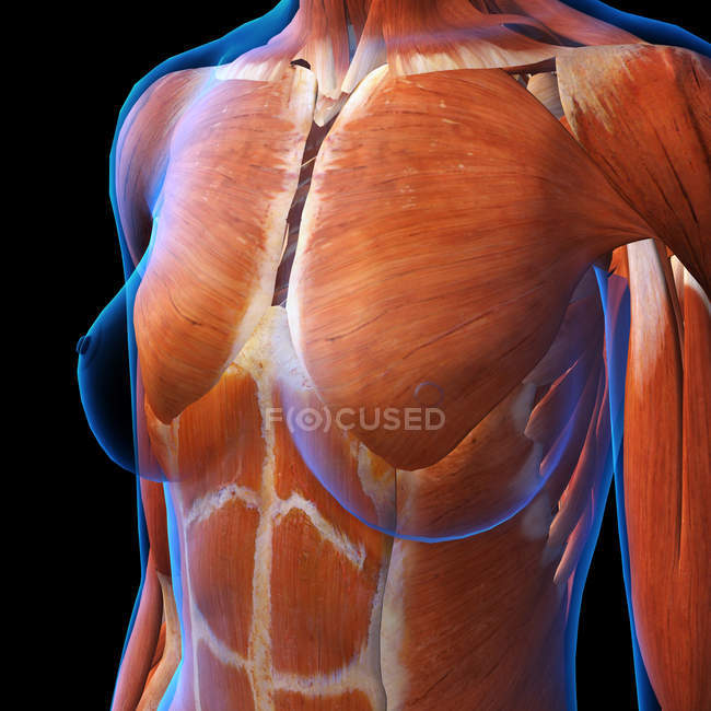 Female chest muscles on black background — Stock Photo