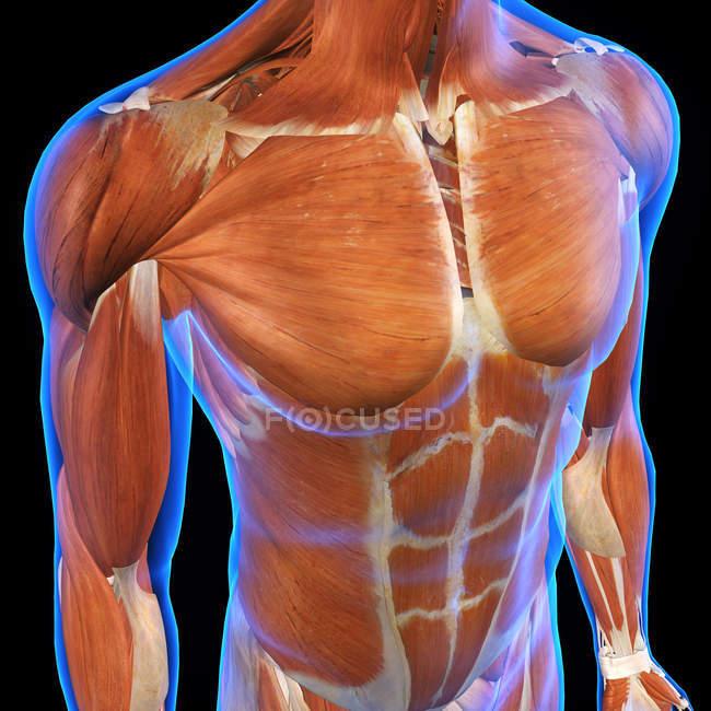Músculos de peito e abdome masculinos em fundo preto — Fotografia de Stock