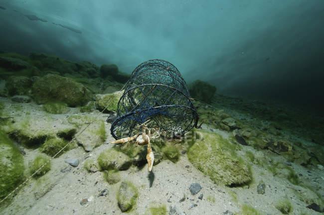 Piège à poissons avec des écrevisses danube sous la glace — Photo de stock