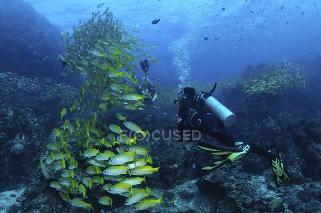 Школа рыбы с дайверами, Richlieu рок, Симиланские острова, Таиланд — стоковое фото