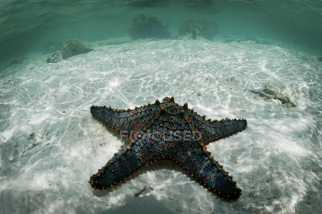Starfish on sandy bottom, Mnemba Atoll, Zanzibar, Tanzania — Stock Photo