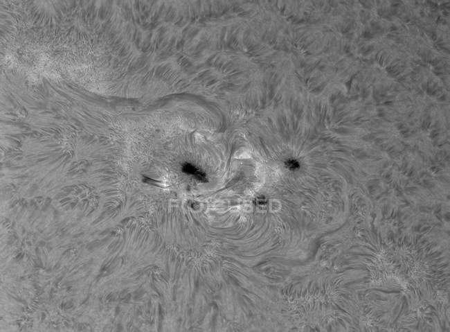 H-alfa sol con áreas activas en colores blanco y negro - foto de stock