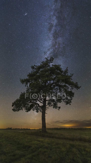 Tree in field at night under Milky Way in Vyazma, Russia — Stock Photo