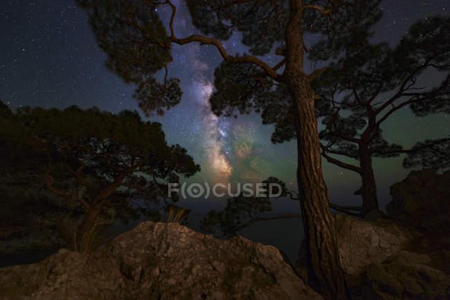 Vía Láctea brillando a través de los árboles en la costa del Mar Negro en Balaklava, Crimea - foto de stock