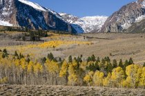 Landscape with autumn leaves, a snow covered mountain, and aspen trees in the Sierra mountains near Lee Vining, California — Stock Photo