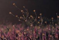 Flores que desabrocham no vale do rio Connecticut — Fotografia de Stock