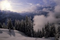 Scenic view of Winter scene in the Swiss Alps — Stock Photo