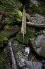 Vierte el agua de un manantial natural en las montañas de Maine en una mano tallada pipa hecha de un tronco de árbol - foto de stock