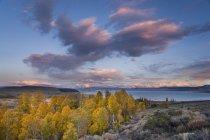 Herbst gelb Espe Bäume mit Sonnenuntergang Wolken über Mono Lake in Kalifornien — Stockfoto
