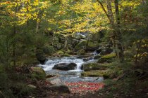 Wasserfall auf Snyder Brook im Herbst, White Mountain National Forest, New Hampshire — Stockfoto