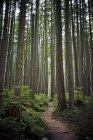 Один трек след ветры через густые леса — стоковое фото