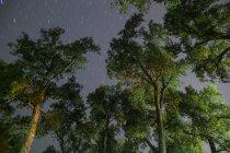 Деревья, освещенной ночью в шлюпку, Вайоминг городской парк — стоковое фото