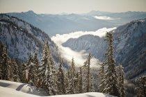 Paisagem de nuvens baixas mentirosos, sentado em um vale abaixo Monte Baker durante o inverno em Washington — Fotografia de Stock