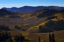 Couleurs d'automne s'allument la campagne dans l'ouest du Wyoming — Photo de stock