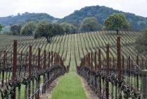 Guardando giù un vigneto nella denominazione Alexander Valley della Sonoma Wine Country nella primavera vicino a Healdsburg, Ca — Foto stock