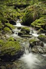 Живописный вид небольшой ручей каскадом вниз через густые леса параметр — стоковое фото