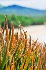 Plant life near the Pacific Ocean on the island of Maui, Hawaii — Stock Photo