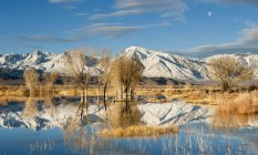 Early morning winter light and setting moon over Eastern Sierra Pond, Owens Valley, Bishop, California — Stock Photo