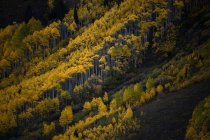 Fall colors explode in Maroon Bells State Park, Colorado — Stock Photo