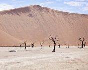 Vista de árboles muertos de Deadvlei, una sartén sal en Namibia, sentarse debajo de un imponente arena duna - foto de stock