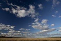 Vue panoramique du ciel nuageux et champ de maïs à l'automne — Photo de stock