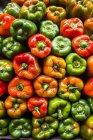 Вид зверху свіжим барвистий солодкий перець як тло — стокове фото