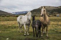Pferdefamilie steht zusammen auf einem Bauernhof in der Landschaft von Idaho — Stockfoto