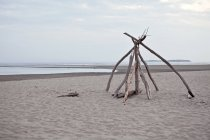 Stand of driftwood along a deserted stretch of Popham Beach in Maine — Stock Photo
