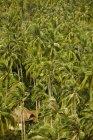 Cabañas en un bosque de palmeras en la playa de Railay - foto de stock