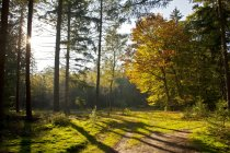 Scenic view of Dutch forest in autumn — Stock Photo