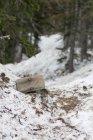 Segnavia emergenti dalla neve nella zona di deserto indiano picchi dopo un grande inverno — Foto stock