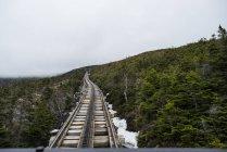 Rails de train dirige à travers les arbres alpins sur les pentes du Mont Washington, Nh — Photo de stock