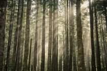 Morning sun light shines through a forest — Stock Photo